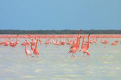 Rio Lagartos Reserve, Mexico