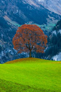 Lone tree in a mountain field Image Nature, All Nature, Amazing Nature, Beautiful World, Beautiful Places, Beautiful Pictures, Palette Verte, Lone Tree, Jolie Photo