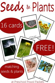 Seed & Plant Matching Game & {FREE} Printable Fun game with awesome seed and plant matching cards! Which seeds grow into which plants? Perfect for preschoolers and older kids! Seeds Preschool, Preschool Garden, Free Preschool, Preschool Printables, Preschool Science, Preschool Lessons, Science For Kids, Seed Activities For Kids, Summer Science