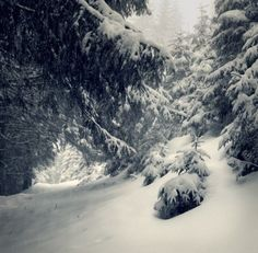 Fairy-tales snowfall in winter forest. Vintage stylized Stock Photo