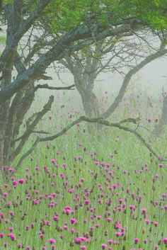 Mist in the meadow