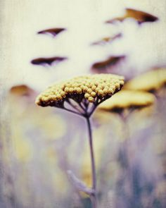 Autumn photography - shades of purple plum mustard yellow wildflower, dreamy ethereal botanical print, via Etsy.