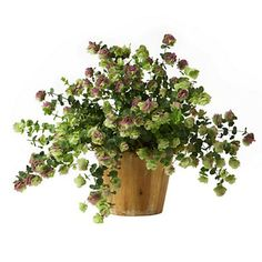 Check out the Flowering Oregano in Herbs, Oregano, Plants & Seeds from Terrain for Green Flowers, Pretty Flowers, Oregano Plant, Purple Tips, Home Garden Plants, Mothers Day Flowers, Wood Planters, Growing Herbs, Edible Garden