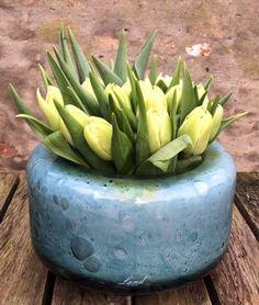Henry Dean  follow us on ; www.facebook.com/pages/Krijnen-wealth-of-flowers/1409308935965781