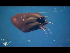 What the vampire squid really eats - because cephalopods rock our world. This is a particularly rockin' one. Do something fun with those little monofilament jiggies.