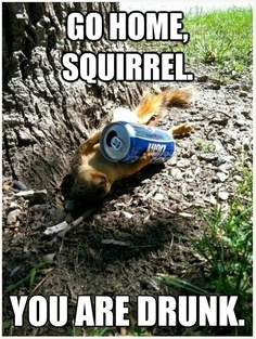Squuuuirrrrel drunk ....
