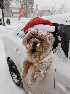 Ho ho ho now I'm cold. But it was fun though Puppies chow chow Cosy Christmas, Christmas Feeling, Xmas, Christmas Time, Christmas Pets, Vintage Christmas, Christmas Wreaths, Merry Christmas, Cute Baby Animals