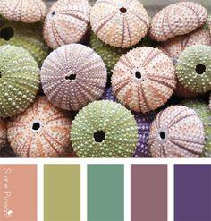 gamme de couleurs suzie pinson