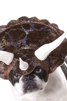 Your dog may look hilarious wearing this Triceratops Dog Horned Headpiece, but the best part is making your second dog totally freak out when he sees. Shark Costumes, Dinosaur Costume, Best Dog Halloween Costumes, Dinosaur Head, Durable Dog Toys, Unique Animals, Pet Gifts, Dog Accessories, Funny Dogs