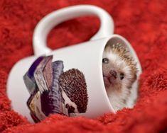 A mug of adorability.