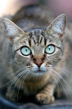 De si grands yeux bleus... .