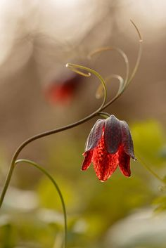 Photos of the genre Exotic Flowers, Amazing Flowers, My Flower, Wild Flowers, Beautiful Flowers, Flowers Wallpaper, Dame Nature, Fleurs Diy, Jolie Photo