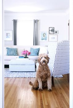 "Sneak Peek: Best of Dogs ""Fern! Next to a wing back chair that was a $30 Craigslist find."" #sneakpeek"