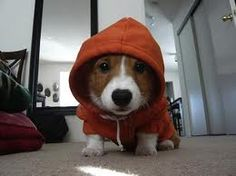 Fancy - Dog Hoodie = I want the doggy hoodie and the doggy! Baby Animals, Funny Animals, Cute Animals, Cute Corgi, Cute Puppies, Cutest Puppy, Puppies Puppies, Cutest Dogs, Love My Dog