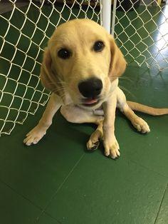 Kona, our Profile Doggie of the Week ◆ www.arfnbark.com & www.facebook.com/arfnbarkpdx
