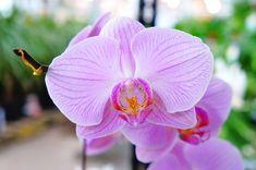 Pot Jardin, House Plants, Planting Flowers, Planters, Rose, Gardening, Blog, Up, Garden Ideas