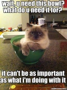 Wait, you need this bowl? What do you need it for? It can't be as important as what I'm doing with it. Funny cat