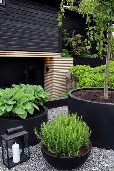A LUSH GREEN ENTRANCE TO THE HOUSE - Therese Knutsen Outdoor Life, Outdoor Gardens, Outdoor Living, Outdoor Plants, Outside Planters, Outside Patio, Home Vegetable Garden, Home And Garden, Garden Modern