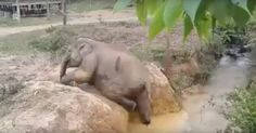 elefante-atrapado