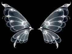 Can  you can see Black Butterfly Wings ...