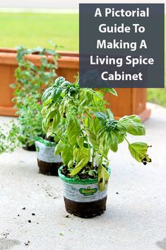 A Pictorial Guide To Making A Living Spice Cabinet Fun Crafts, Diy And Crafts, Crafts For Kids, Cooking With Fresh Herbs, Margarita Pizza, How To Make Something, Spice Garden, Cedar Planters, Fresh Salsa
