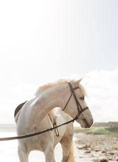 Wedding with horses yes!!!!!!!!!!! My dream wedding!!!!!!!!
