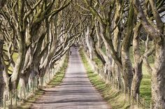 The Dark Hedges, The King's Road
