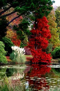 No body does it better than Mother Nature. To give mother nature the chance to show its potential and grace. Amazing Gardens, Beautiful Gardens, Pretty Pictures, Cool Photos, Amazing Pictures, Beautiful World, Beautiful Places, Simply Beautiful, Beautiful Morning