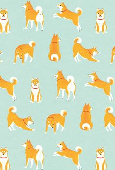 Adorable and cute pattern of a shibu inc dog / puppy in many different poses on a blue background | Animal