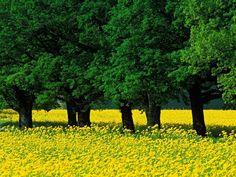 32 best spring in paris images nature beautiful nature wallpaper rh pinterest com