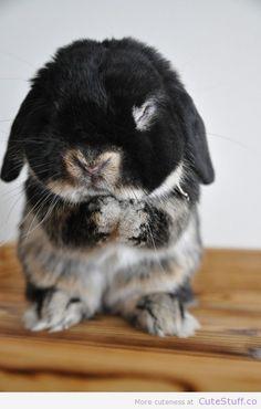 calico-bunny-praying