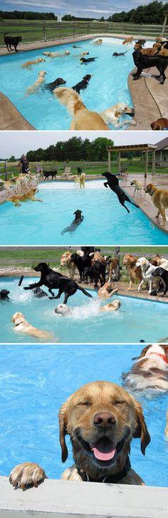 How some dogs are saying goodbye to summer...pool party style.