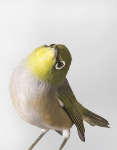 Portraits of Birds Ruffling with Personality by Leila Jeffreys  http://www.thisiscolossal.com/2014/09/bird-portraits-ruffling-with-personality-by-leila-jeffreys/