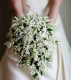 Pretty lily of the valley