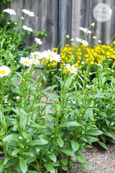 5 Elements of a Cottage Garden | from On Sutton Place