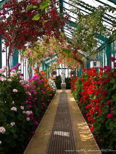 Royal Greenhouse V