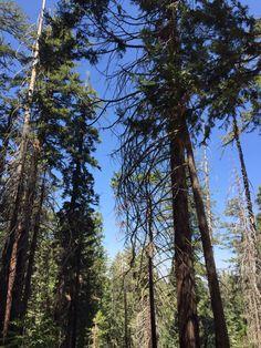 Yosemite, California Yosemite California, Natural World, Nature, Plants, Naturaleza, Plant, Nature Illustration, Off Grid, Planets