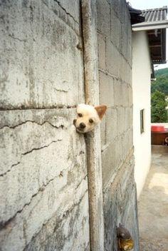Twitter / Funnydog_bot: 呼んだ? #犬 #画像 ...
