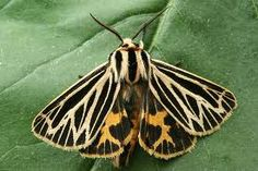 moths - Google Search Creatures, Butterfly, Birds, Animals, Google Search, Insects, Butterflies, Animales, Animaux