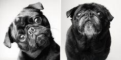 Como os cães envelhecem? Um projeto fotográfico curioso e comovente
