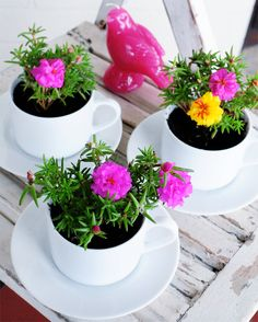 Recycle old mugs and tea cups by turning them into planters. Get the how-to from Go Make Me.