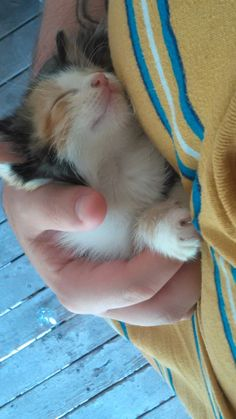 cuteanimalspics:  I'm not a cat person, but nobody can resist this one…