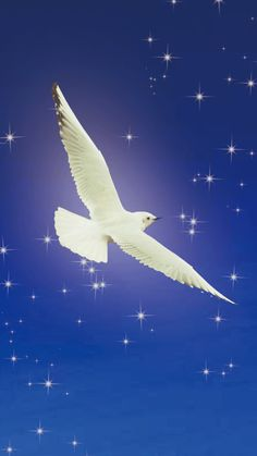 仕事運があがる待ち受け! | ナチュラルに…★自分らしく★ Spiritual Pictures, Peace Dove, Fantastic Art, Cute Wallpapers, Magick, Spirituality, Bird, Nature, Artwork
