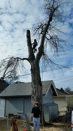 Tree Services of Omaha - Tree Removal