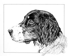 """A portrait of Jethro, my sister's English Springer Spaniel.  8""""x10"""" on watercolor paper, 2012."""
