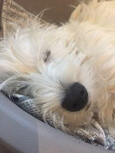 Silence Molly sleeps !❤️