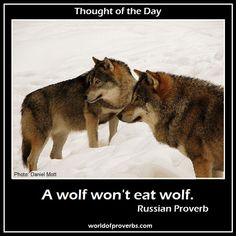 World of Proverbs - Famous Quotes: A wolf won't eat wolf. ~ Russian Proverb [15461]