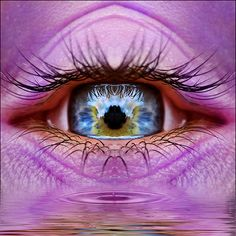 nature reflection in eye