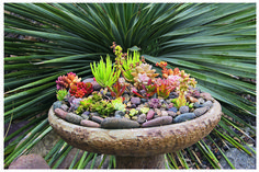 Another idea for the fountain at Applehurst. From Debra Lee Baldwin's book 'Succulent Container Gardens'