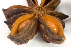 star anise seeds and pod